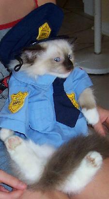 225_Cat_Police.jpg